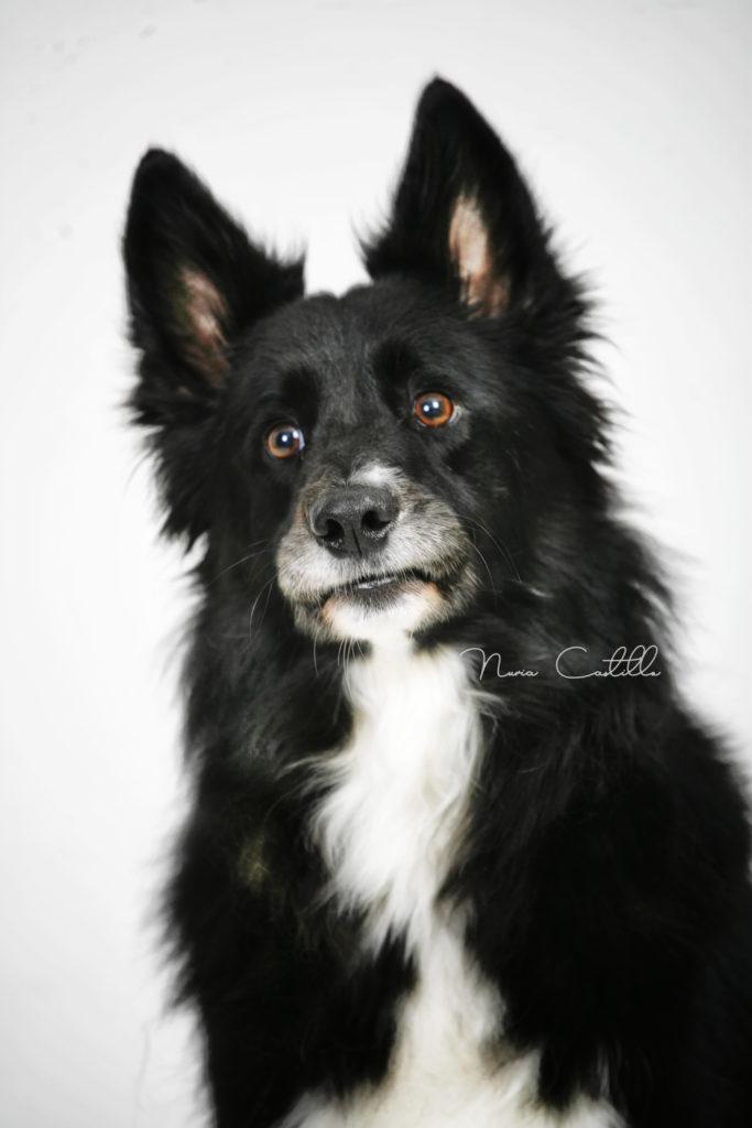 retrato fotografico de mascota